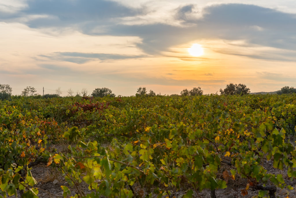 Domaine de Suriane - sunset over the estate